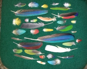 Parrot feathers, naturally molted, cruelty free.