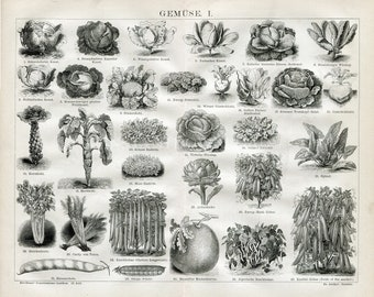 Instant Download Botanical Vegetables Cabbage Artichoke Spinach Celery Beans  Decor 400 Dpi Antique Print Repro For Crafting German