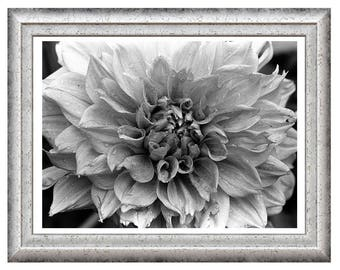 Wet Dahlia, Fine Art Photography, Home Décor, Wall Art, Free Shipping, Minimalist, Botanical,  Black and White  Photography
