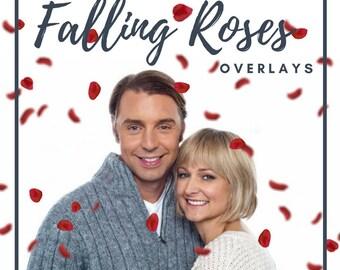 5 Falling Rose Petals Photo Overlays , Red Rose Petals PNG, Petals Photoshop Overlays, Fluttering Petals, Rose Petals, Digital backdrop