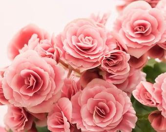 Pink flowers photograph Digital download Fine Art Photography pink blossoms nursery art