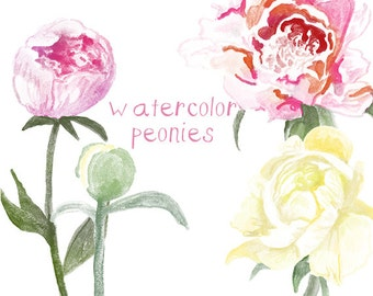 Watercolor Peony Flower Clip Art for Scrapbooking Instant Download Digital Flowers Digital Clipart Commercial Use
