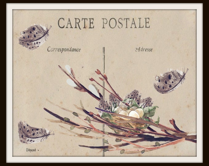 Instant Download printable Art,Post Card,Bird Nest,Feather,Digital Print Set,Graphic Print,Wall Art Print,Vintage,Carte Postale Vintage,