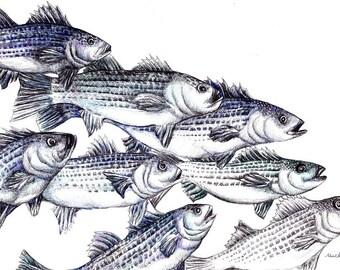 Fish Art Print - Striped Bass Ink Drawing Giclee Print - Fish Illustration - Father's Day Fishing - Fish Wall Art - Fishing Gift