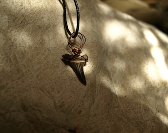 Real Shark's Tooth Pendant with Recycled Copper Binding