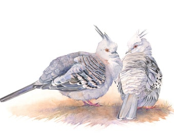 Crested Pigeon print of watercolour painting 5 by 7 size print CP3015 wall art print - bird art print