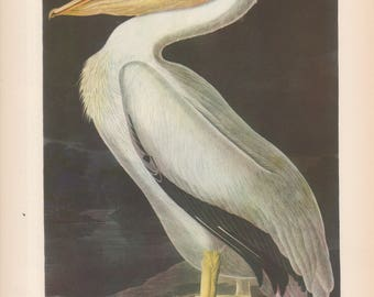 Original Vintage 1937 JohnJames Audubon Birds of America Bookplate Print Bird Print 311 White Pelican 312 Old Squaw