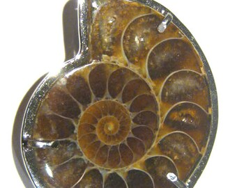 pendant ammonite -fossil