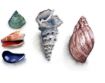 Seashells Watercolor Print 5 x 7