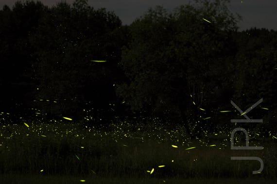Lightning Bugs 2016 #2, Western Massachusetts