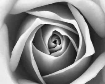 Black and white Rose close up photography print - fine art photo macro garden nature wall decoration grey soft