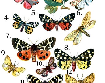 Vintage Butterfly Clip Art Printable Instant Download 12 images