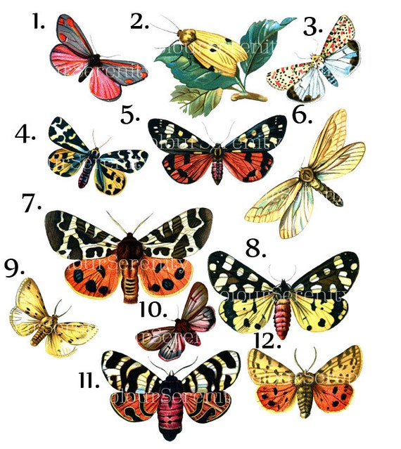 Vintage Butterfly Clip Art Printable Instant Download 12 images from  ColourSerenity on Etsy Studio