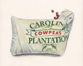 Cowpeas. Original egg tempera illustration from 'The Taste of America' book.