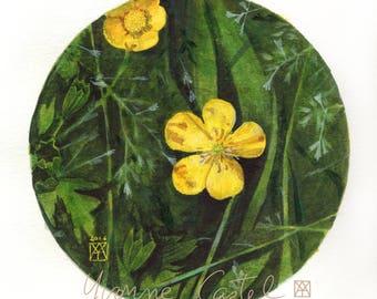 Bouton d'or - Aquarelle - cercle - printemps