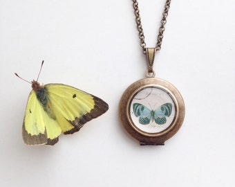 Teal Butterfly Round Locket - Vintage Illustration Brass Locket Necklace - Blue Papillon