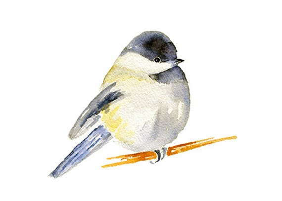 chubby chickadee watercolor clipart painting chickadee print rh etsy com black capped chickadee clipart chickadee clipart black and white
