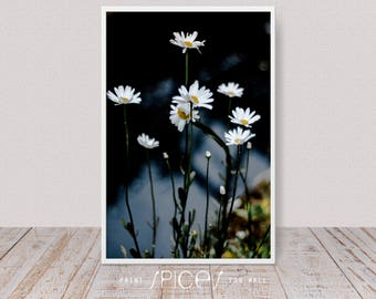 Nature Photography, Daisies, Digital Download Art, Still Life Photo, Dreamy Flower Print, Botanical, Blue Gray Wall Decor, Floral, Garden