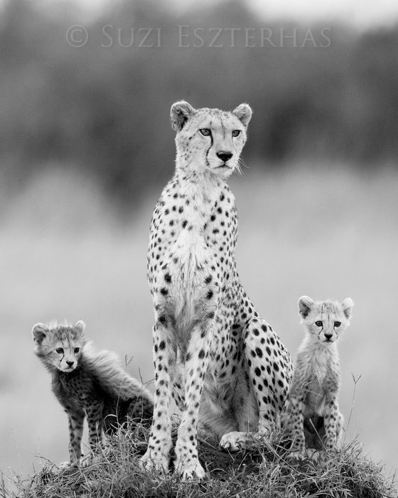 Mom and baby animal photography cheetah mother babies