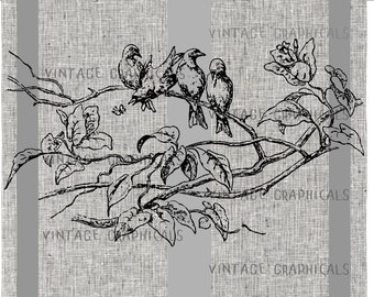 Birds on a branch Digital download graphic image for iron on fabric transfer burlap decoupage pillow paper crafts tote bags No. 827