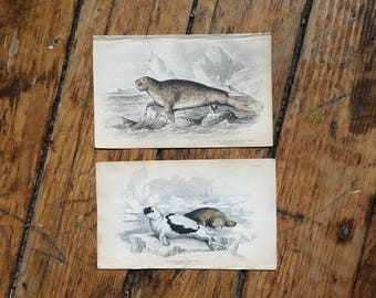c.1833 ANTIQUE SEAL PRINTS - original antique sea life prints - Jardine animal prints - marine mammals - set of 2 hand colored engravings