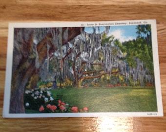 Bonaventure Cemetery-Vintage Postcard Savannah GA