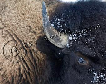 Fine Art Wildlife Photos by Brett Smith