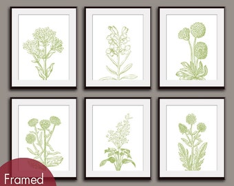 Wild Flower Botanical Prints (Series M2) - Set of 6 - Art Prints (Featured in Basil on White) Garden Art Prints / Posters