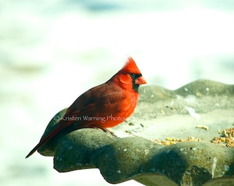 Cardinal, Winter, Cardinals, Birds, Red Birds, Bird Photography, Red