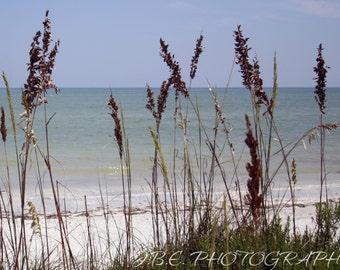 Sea Oats   Photography   Photo   Nature   Print   Beach   Ocean   Wall Decor