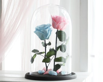 Two Beauty and the beast roses(Large), Forever pink rose, blue rose, Enchanted Rose, Belle rose, rose in glass, preserved rose, eternal rose
