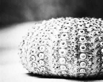 "Black and White Sea Urchin Photography - seashell beach print sea shell still life art grey gray modern wall art photograph, ""Sea Urchin"""