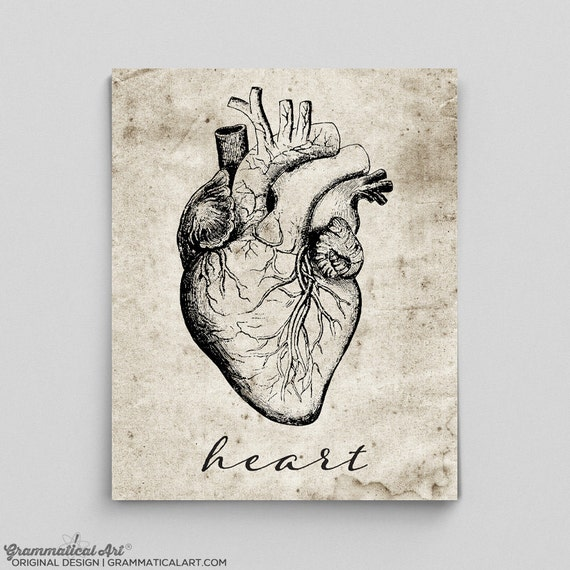 Heart Print Vintage Heart Poster Human Anatomy Poster Anatomy