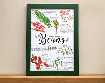 A Grower's Guide to Beans, original illustrated print for framing