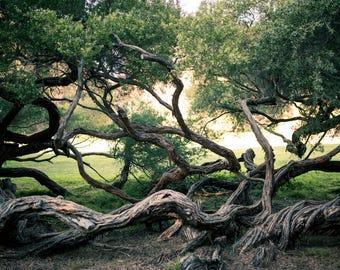 Trees, digital download