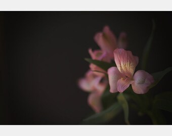 Alstroemeria Photo Print, Floral Print, Botanical Print, Flower Photo, Pink Flower, Kitchen Art, Minimalist Art, Farmhouse Photo