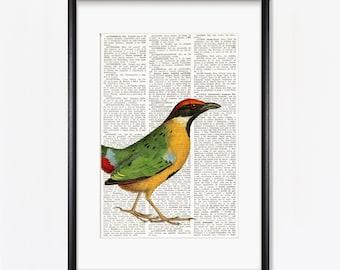 PITTA BIRD dictionary print, bird prints, Ornithology, Vintage Birds, Natural History Art, Dictionary Art Print, bird wall decor, #203-2