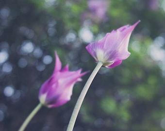 Purple tulips, soft focus photography, Wall Art, Home Decor, Office Art, Nursery Decor, Spring Flowers, Green, Soft Circular Bokeh