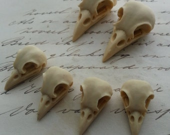 Bird Skull Raven Skull Crow Skull Cameo Cabs Resin Cabochon Taxidermy Animal Steampunk Gothic Goth Skull Ivory 35x16mm and 21x12mm 6 PIECES
