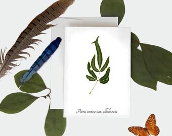 Brake Fern Botanical Card - Pressed Fern Print Greeting Card - Size A7