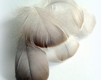 X 5 genuine 10-12 cm beige goose feathers (Lot B) goose feathers