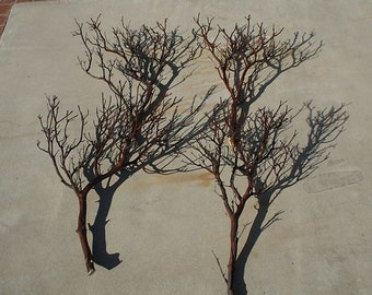"""2 piece sample pack FULL 18"""" Manzanita Branches for centerpieces or wishing trees for wedding"""