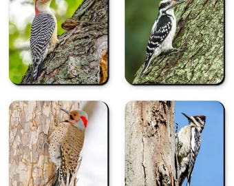 Set of 4 Woodpecker Coasters, Bird Photo Coasters, Bird Lover Gift, Bird Photography, Beverage Coasters, Drinkware, Kitchen & Dining