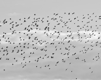"""Wildlife Photography, Nature Photography, Birds in the Wind, Sky, Flock of Birds, Black and White, Migration, """"South"""", Modern Photography"""