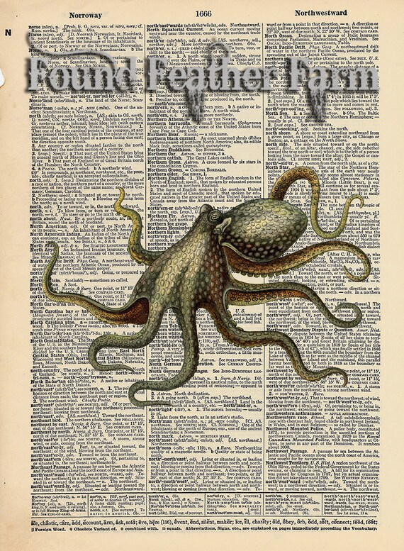 """Vintage Antique Dictionary Page with Antique Print """"Octopus Verticle"""""""
