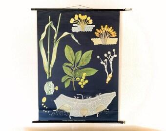 Original Wall Decor, Mid Century Modern, Lunartics Vintage, Botanical Wall Decor, Scientist Poster, German School Map, Jung Koch Quentell