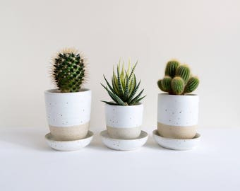 Set of 3 Ceramic Planters & Saucers - White Quail, plant pot for succulent and cactus, plant holder, gift, decoration, ceramic pots