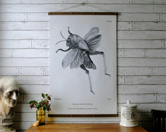 Grasshopper Chart