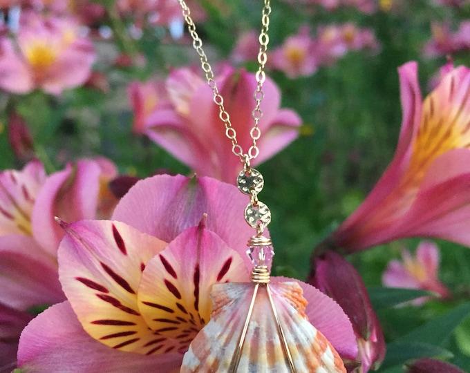 "Sunrise Shell Necklace /18""/14K Gold Filled"