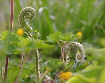 8x10 ferns still furled